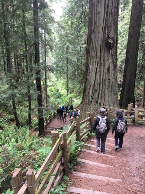 2018 06 14 Redwoods 136