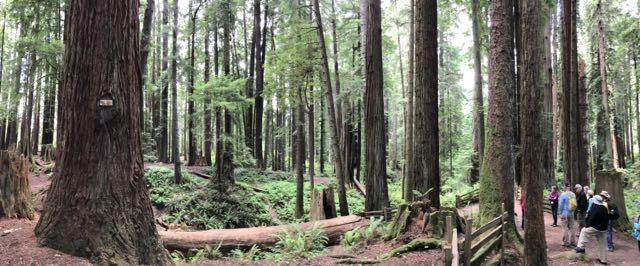 2018 06 14 Redwoods 138