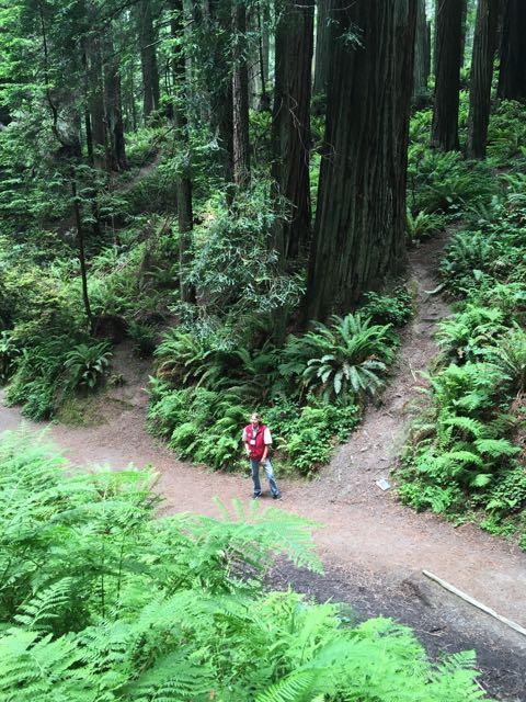 2018 06 14 Redwoods 140