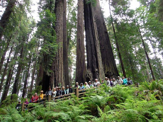 2018 06 14 Redwoods 141