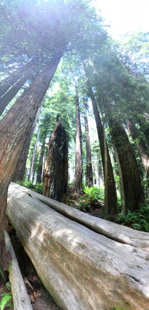 2018 06 14 Redwoods 142