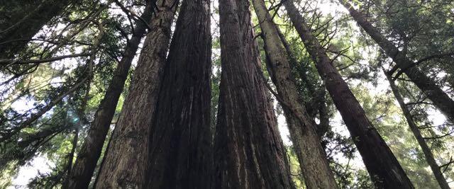 2018 06 14 Redwoods 143
