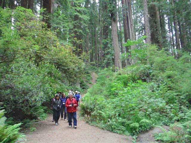 2018 06 14 Redwoods 145