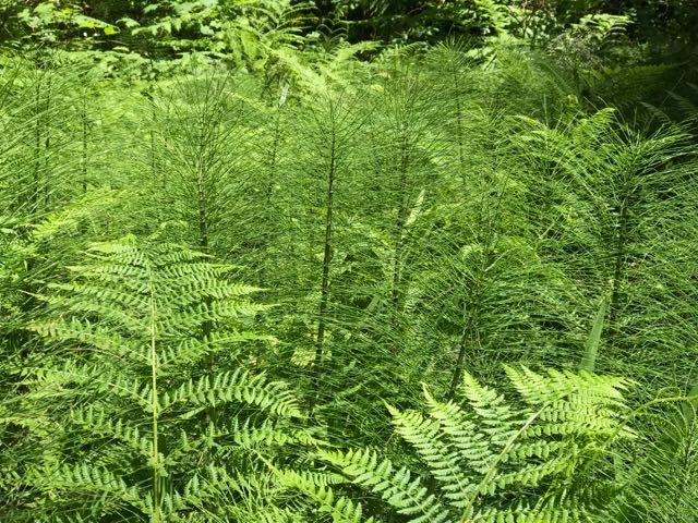 2018 06 14 Redwoods 146