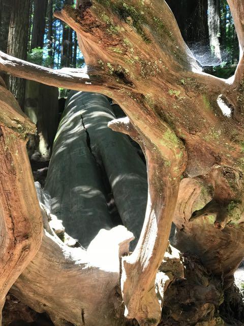 2018 06 14 Redwoods 147