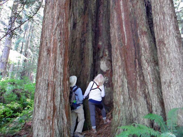 2018 06 14 Redwoods 150
