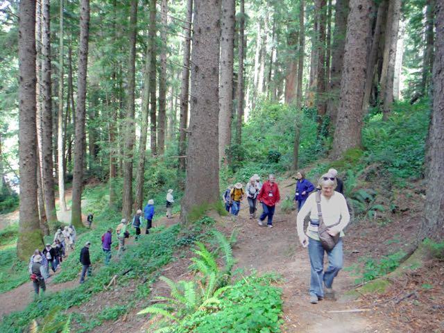 2018 06 14 Redwoods 151