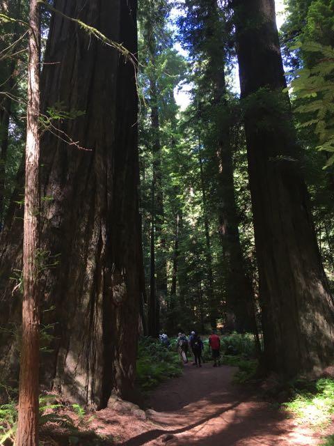 2018 06 14 Redwoods 17