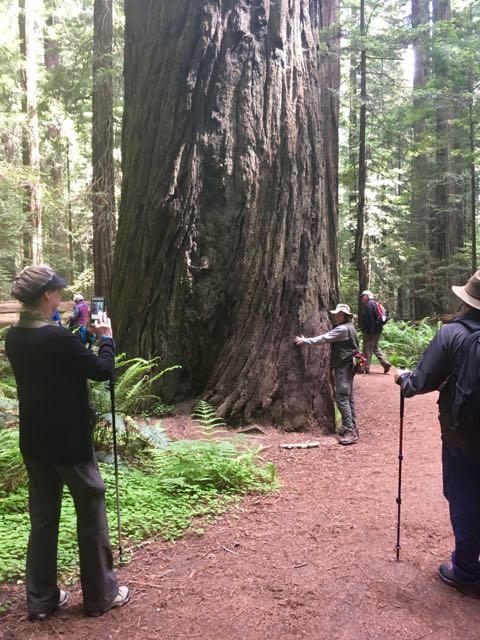 2018 06 14 Redwoods 18