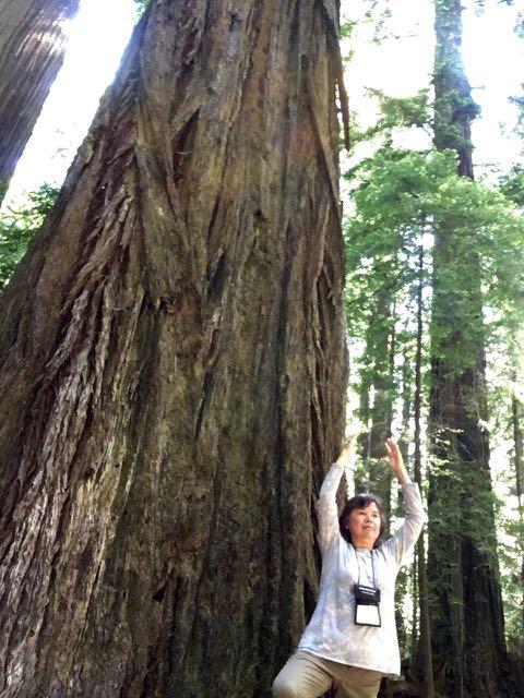 2018 06 14 Redwoods 19