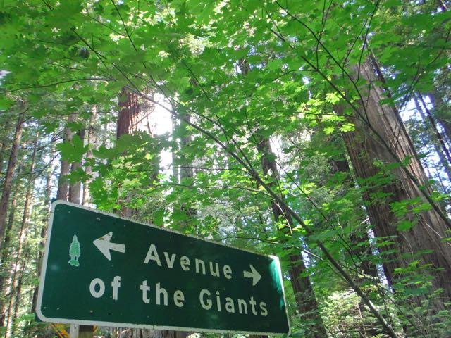 2018 06 14 Redwoods 2