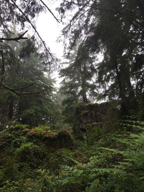 2018 06 14 Redwoods 201