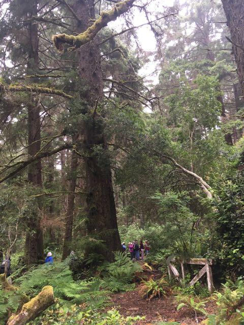 2018 06 14 Redwoods 202
