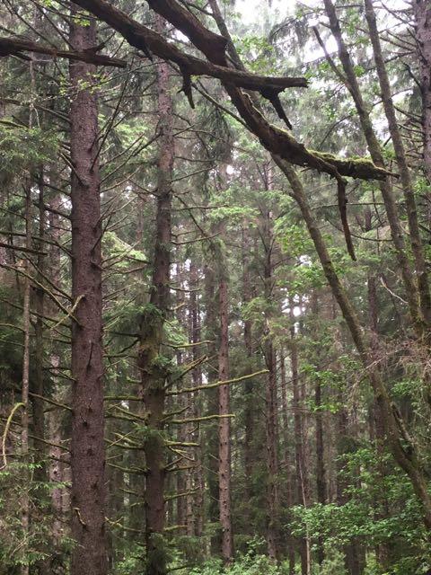 2018 06 14 Redwoods 203