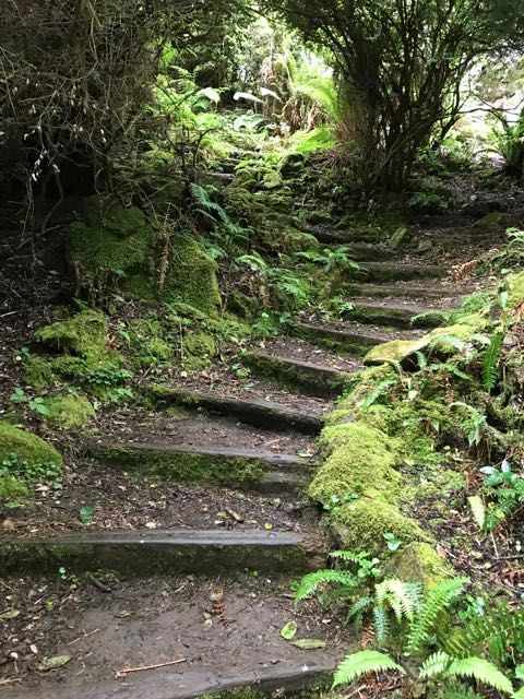 2018 06 14 Redwoods 204