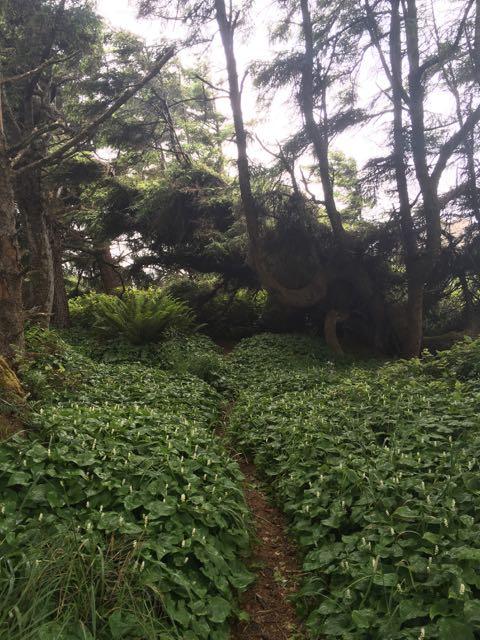 2018 06 14 Redwoods 210