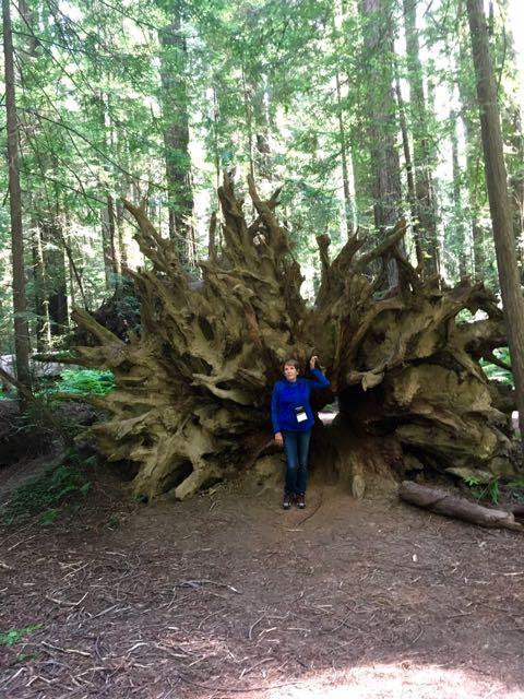 2018 06 14 Redwoods 24