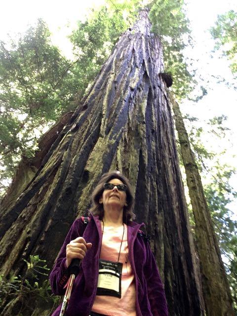 2018 06 14 Redwoods 262