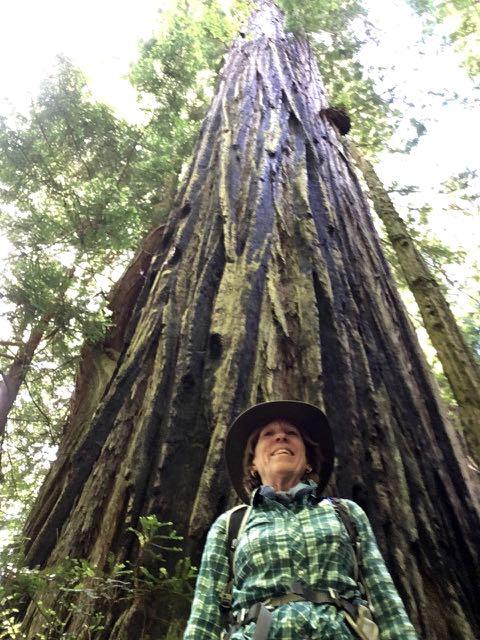 2018 06 14 Redwoods 263