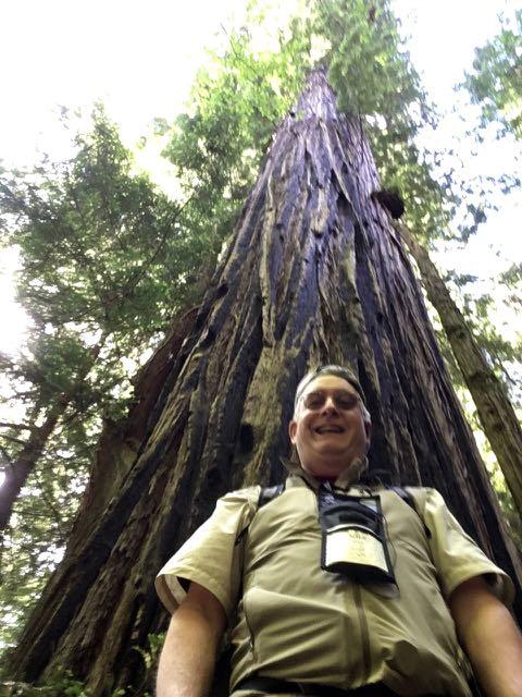 2018 06 14 Redwoods 265