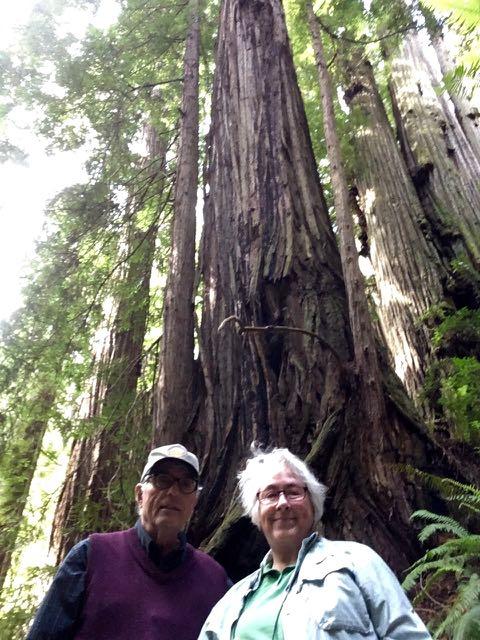 2018 06 14 Redwoods 266