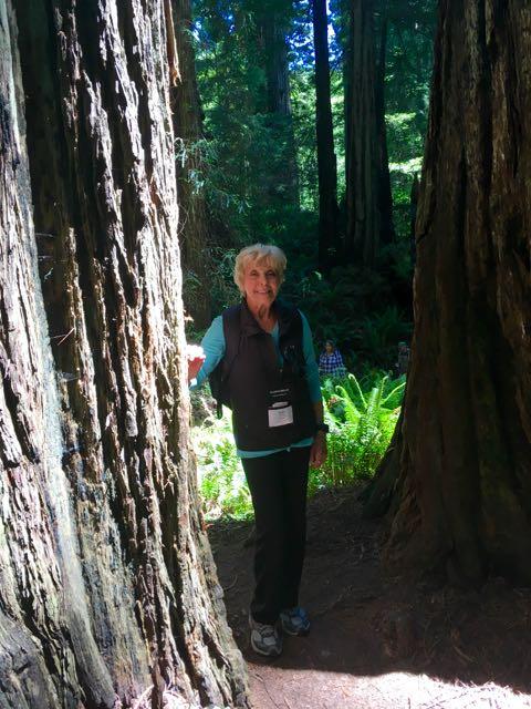 2018 06 14 Redwoods 269
