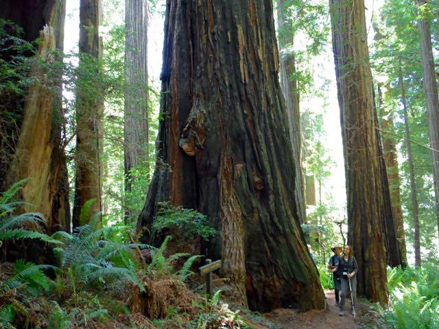 2018 06 14 Redwoods 270