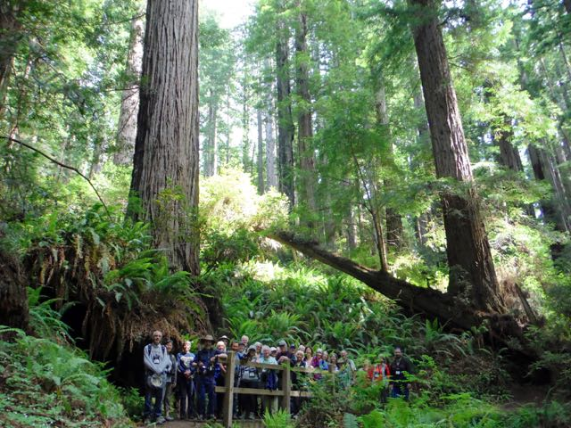 2018 06 14 Redwoods 271