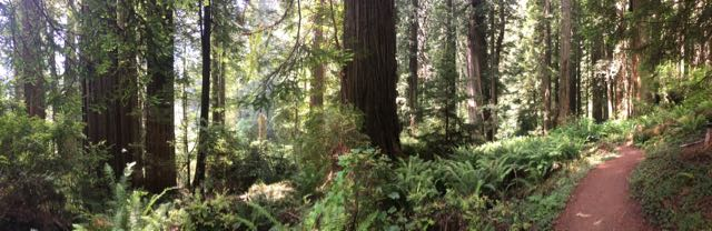 2018 06 14 Redwoods 275