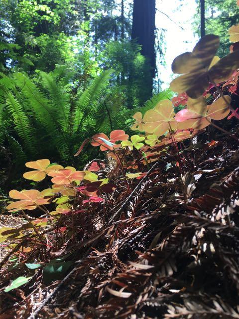 2018 06 14 Redwoods 276