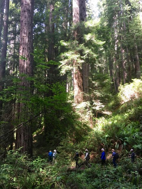 2018 06 14 Redwoods 278