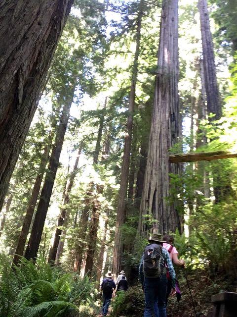 2018 06 14 Redwoods 279