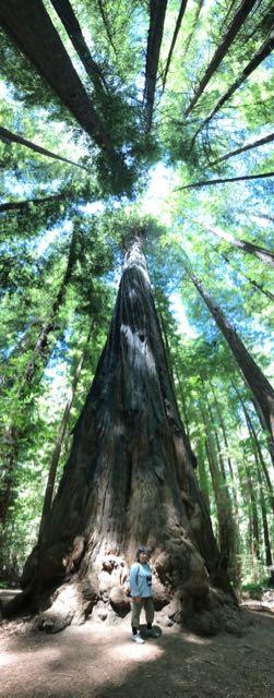 2018 06 14 Redwoods 28