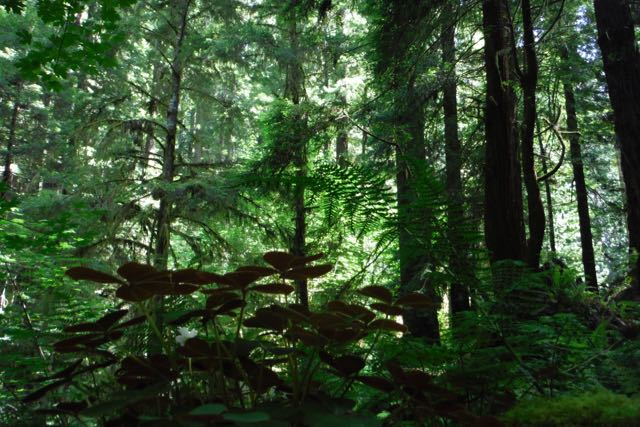 2018 06 14 Redwoods 280
