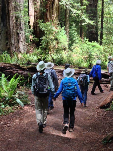 2018 06 14 Redwoods 282