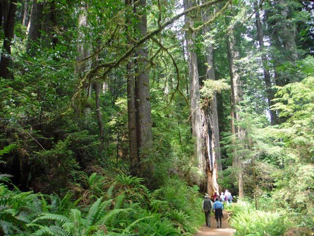 2018 06 14 Redwoods 288