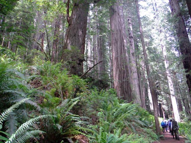 2018 06 14 Redwoods 289