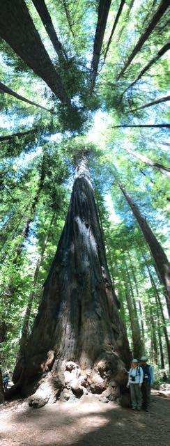2018 06 14 Redwoods 29