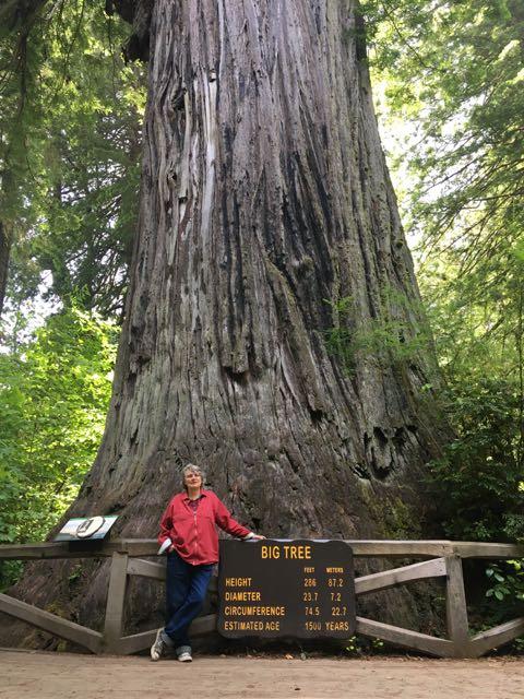 2018 06 14 Redwoods 292