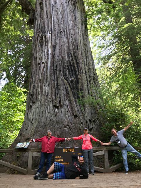 2018 06 14 Redwoods 297