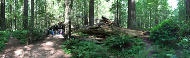 2018 06 14 Redwoods 30
