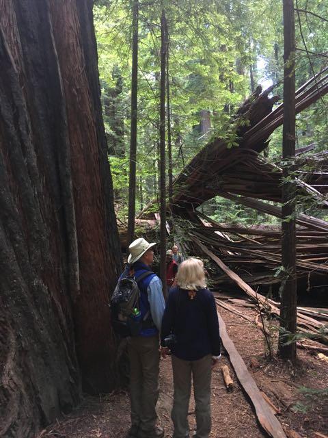 2018 06 14 Redwoods 32