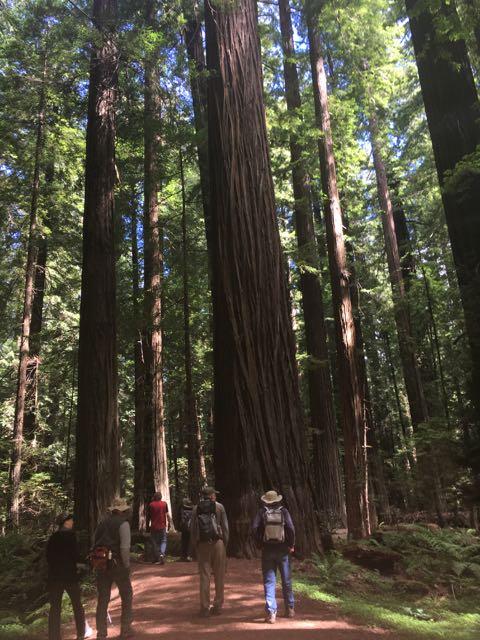 2018 06 14 Redwoods 33