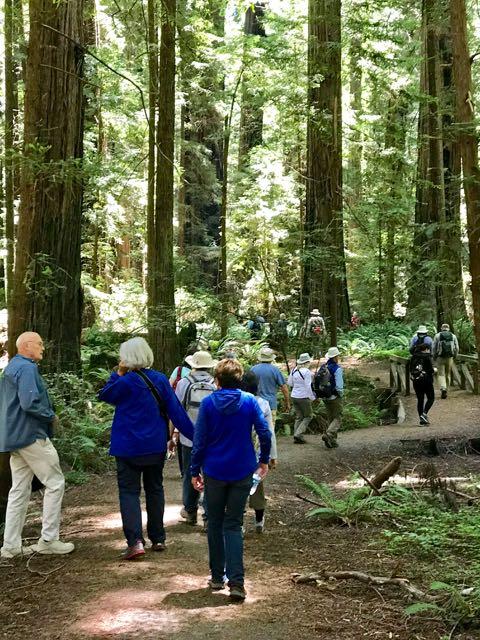 2018 06 14 Redwoods 39