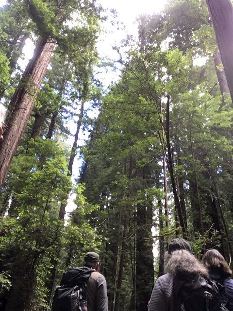 2018 06 14 Redwoods 4