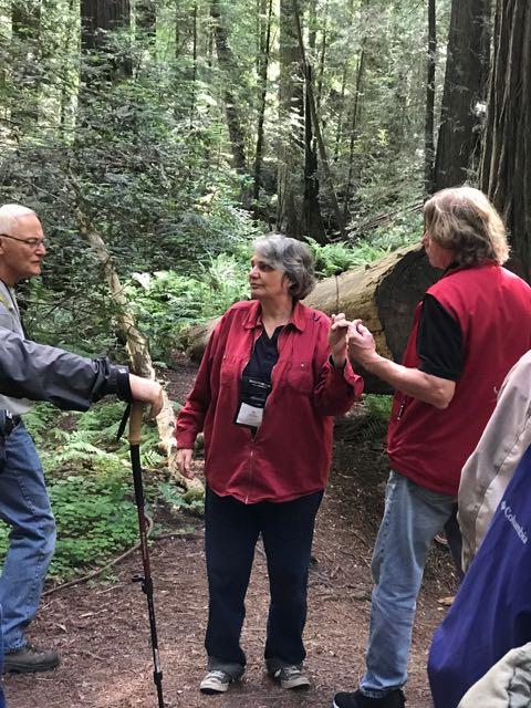 2018 06 14 Redwoods 40