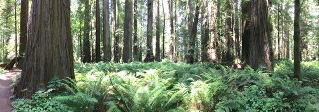 2018 06 14 Redwoods 45