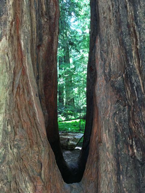 2018 06 14 Redwoods 47