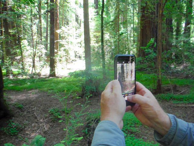 2018 06 14 Redwoods 50