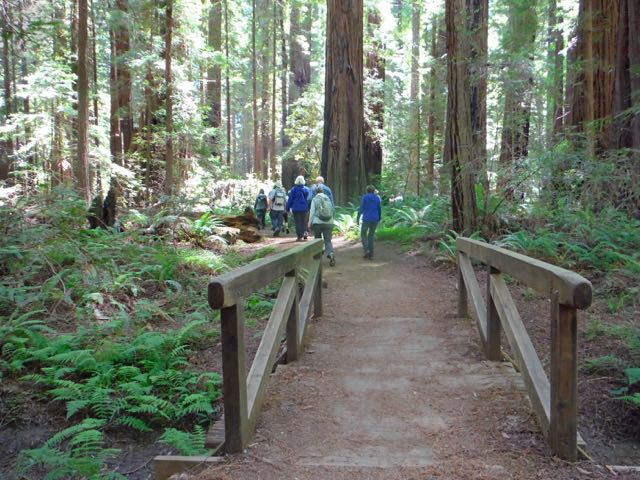 2018 06 14 Redwoods 51
